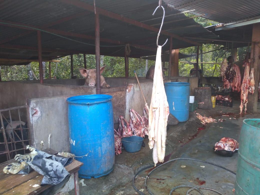 Mil 300 kilos de carne fueron incautados en Teruel