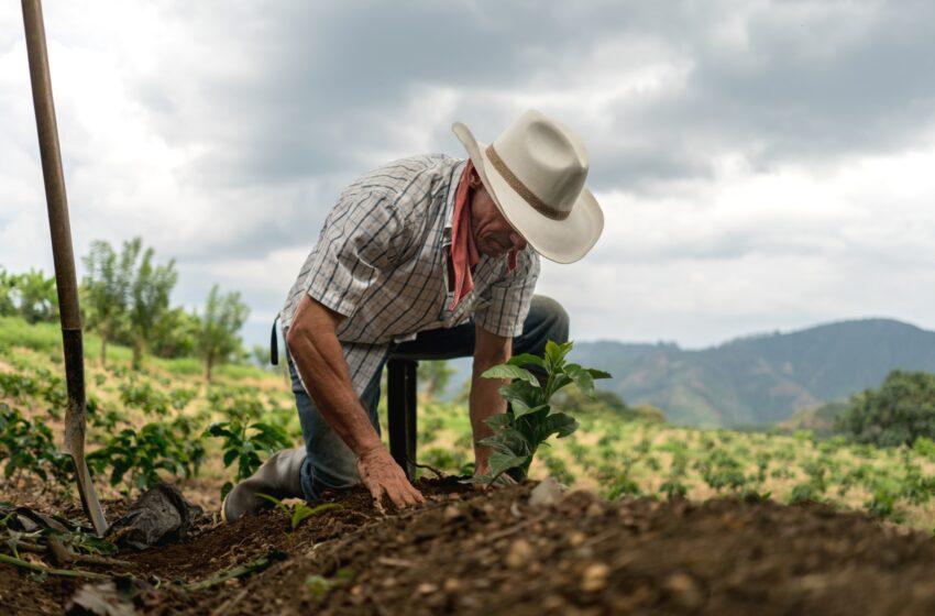"""""""Los campesinos son los héroes del desarrollo agropecuario del país»: Claudia Ortiz"""