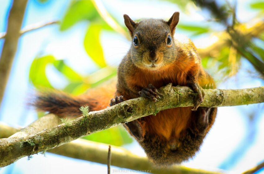 Isnos constituye su primer grupo de monitoreo de la biodiversidad