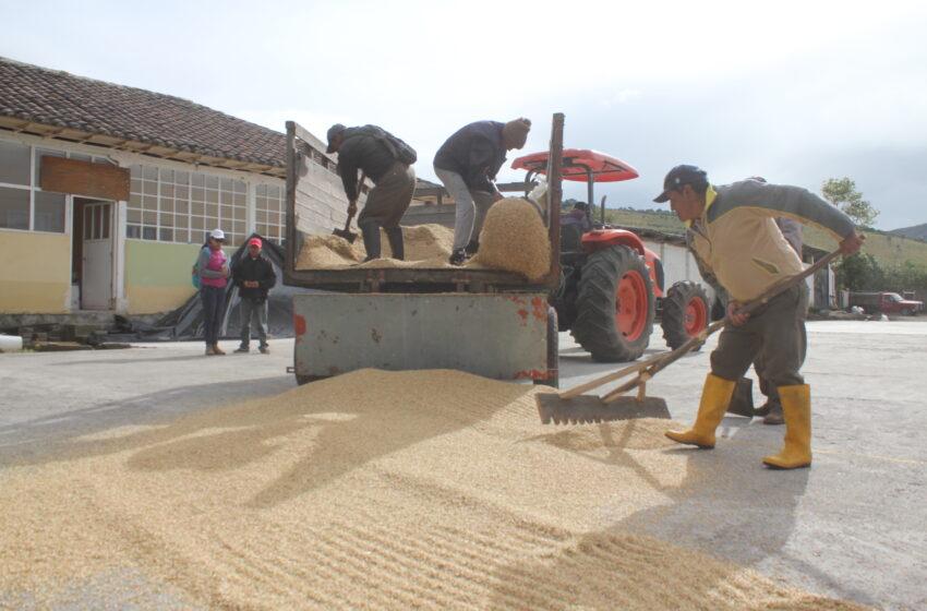 Llamado de Acosemillas para utilizar semillas certificadas en primer ciclo de siembra