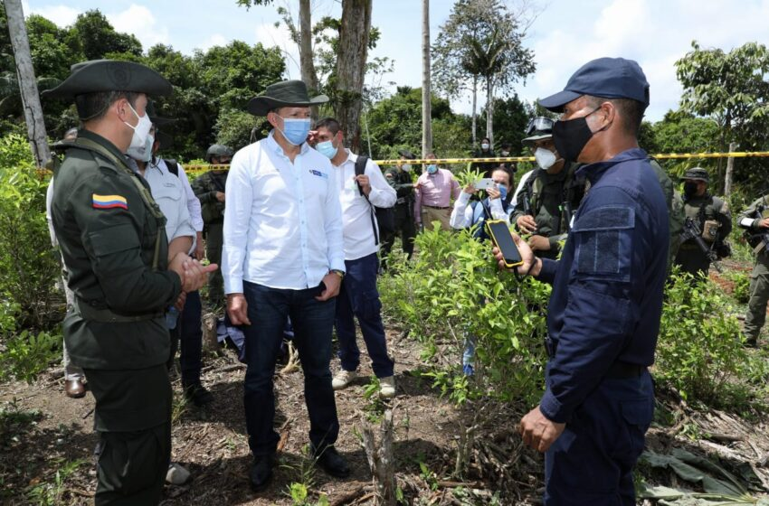 Más de 7 mil hectáreas de cultivos ilícitos erradicadas este año