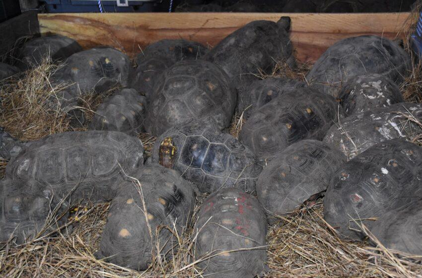 Especies silvestres rehabilitadas en Huila, fueron liberadas en el Meta