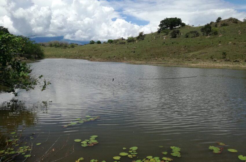 Humedales, ecosistemas vitales para la biodiversidad