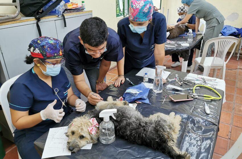 Brigadas de bienestar animal en el Huila serán institucionalizadas