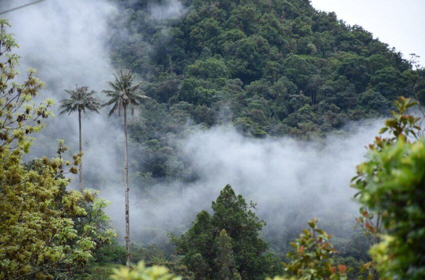 Disminuye índice de deforestación en el Huila